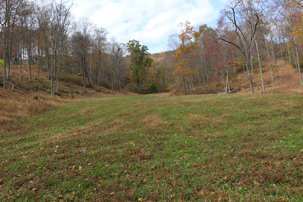 Whitetail Deer Hunting Food Plot