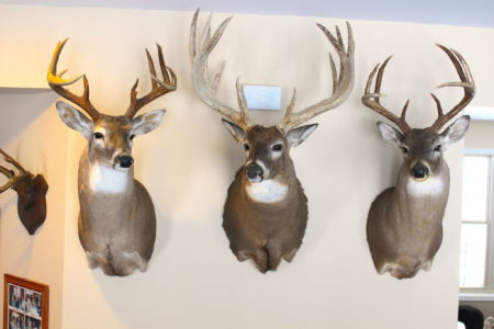 Whitetail Deer Hunting Cabin Buck